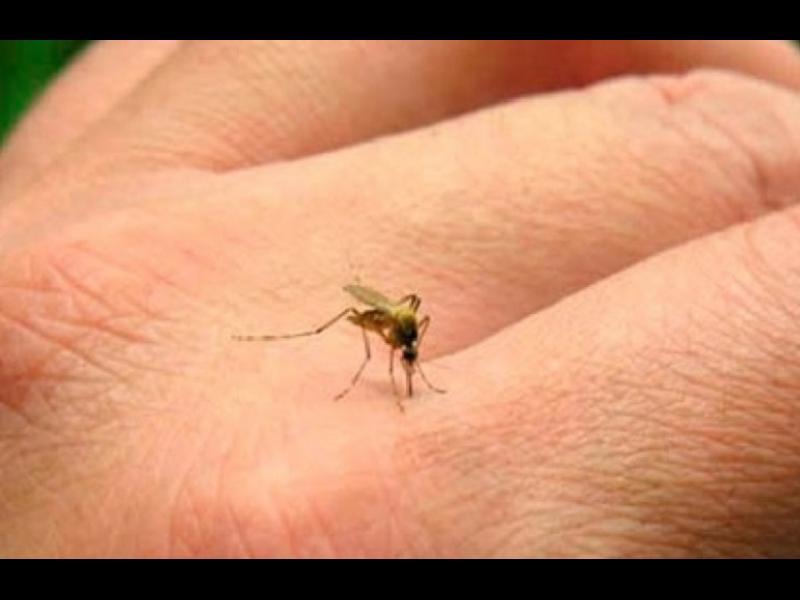 Бабини хитрини за справяне с комарите