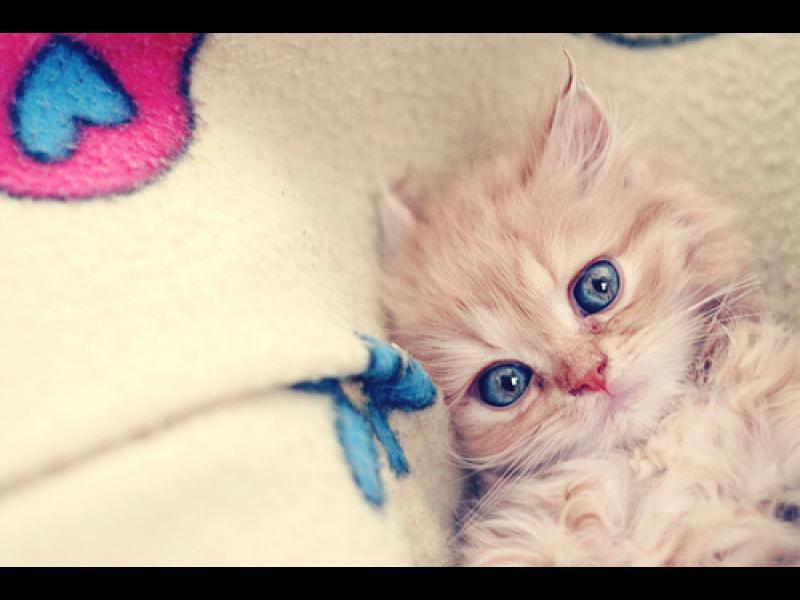 10 прекрасни начина, по които котката казва: Обичам те!