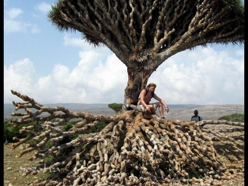 Остров Сокотра не е от тази планета