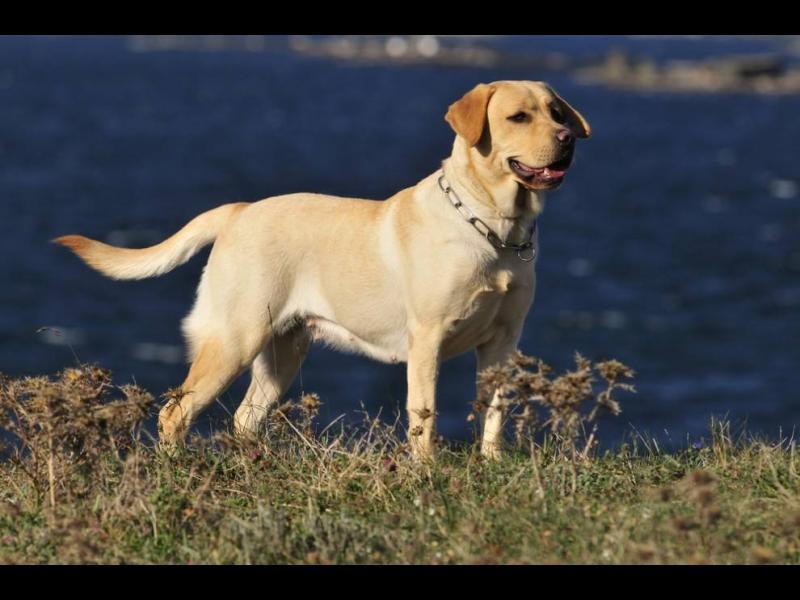 Кои кучета хапят най-често?