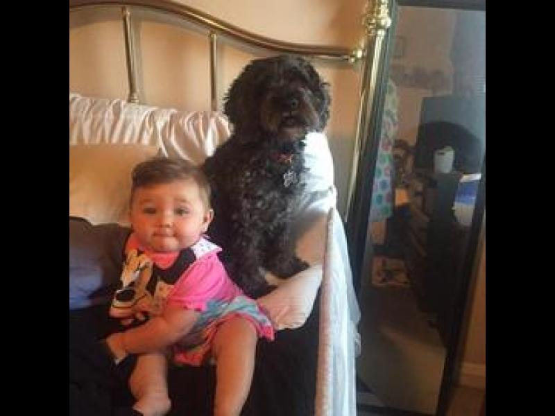 Куче загина в пожар, но спаси 8-месечно бебе