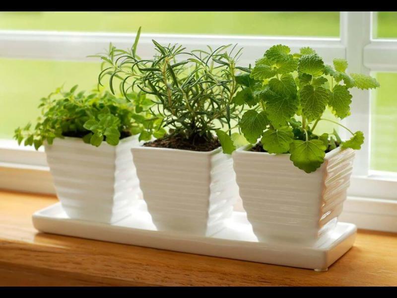 Как да отглеждаме билки и подправки у дома