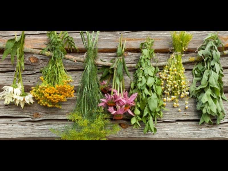 6 билки за проблеми със стомаха