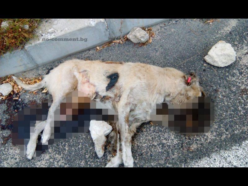 Доброволци откриха нови 6 трупа на кучета от приюта в Кърджали /СНИМКИ 18+/