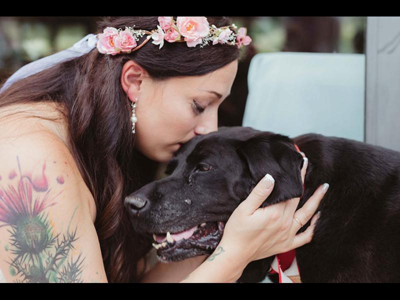 15-годишно умиращо куче живя, за да види собственичката си омъжена