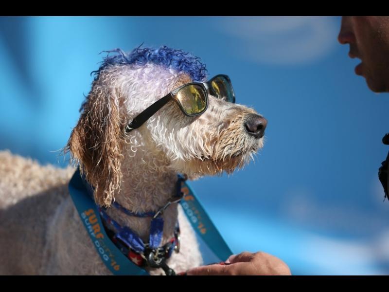 Сърфиращо куче... Защо не? - картинка 1