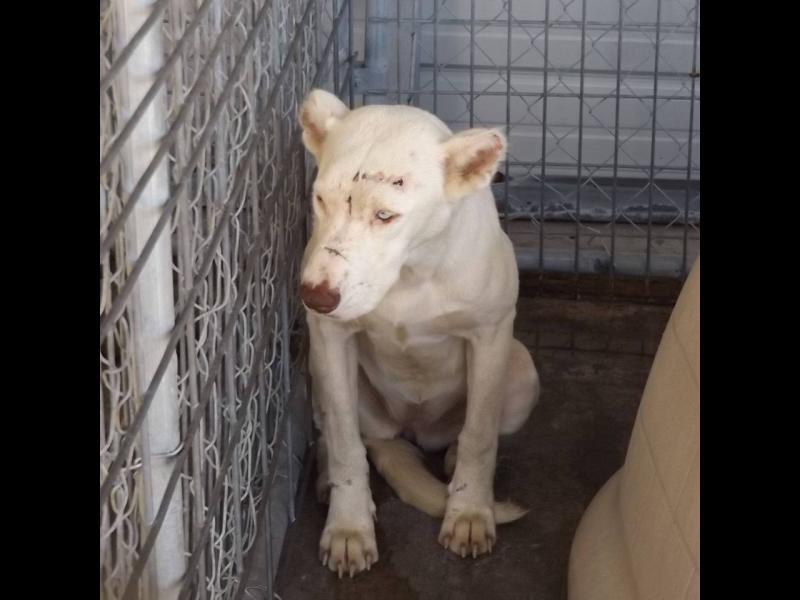 Изплашено куче буди спасителката си, за да й благодари /ГАЛЕРИЯ/