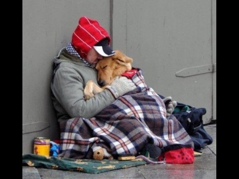 Как се грижат за бездомниците и техните животинки по света /СНИМКИ/