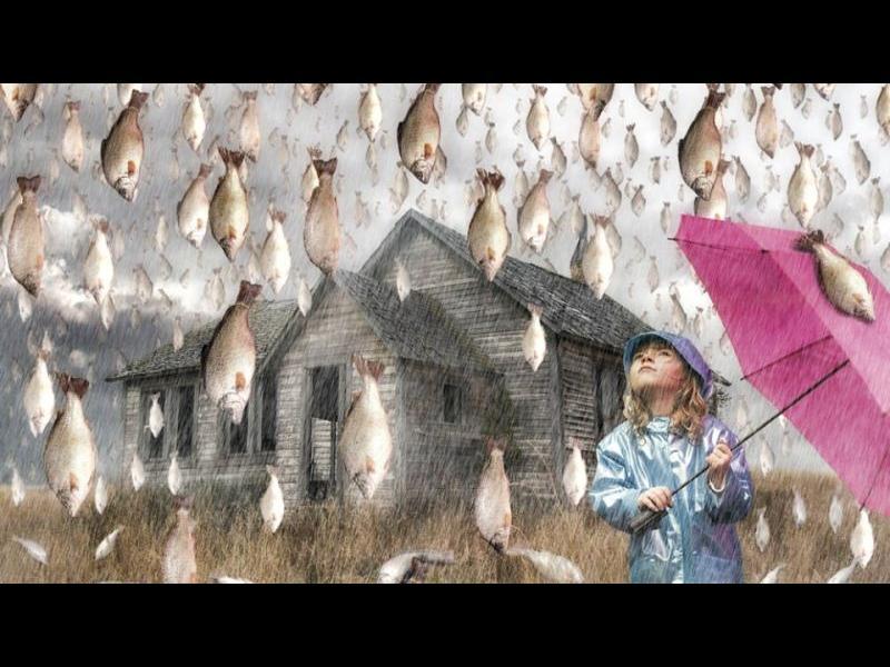 Мястото, където валят риби - картинка 1