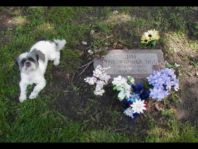 Най-добрият приятел на човека... до гроб