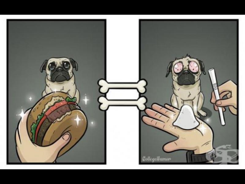 Как кучетата виждат света? /ГАЛЕРИЯ/