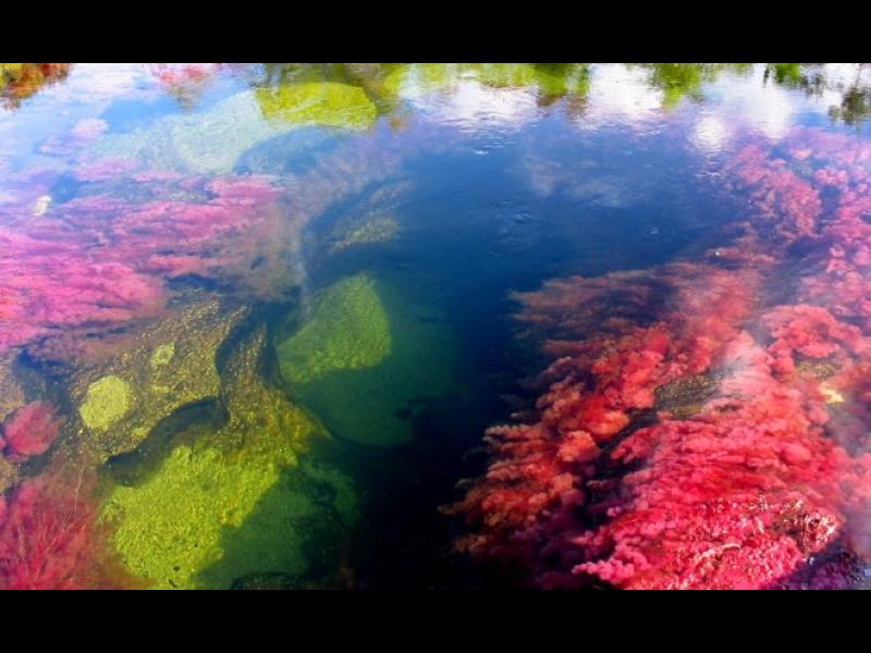 Изумително! 5-цветната река Каньо Кристалес /СНИМКИ/