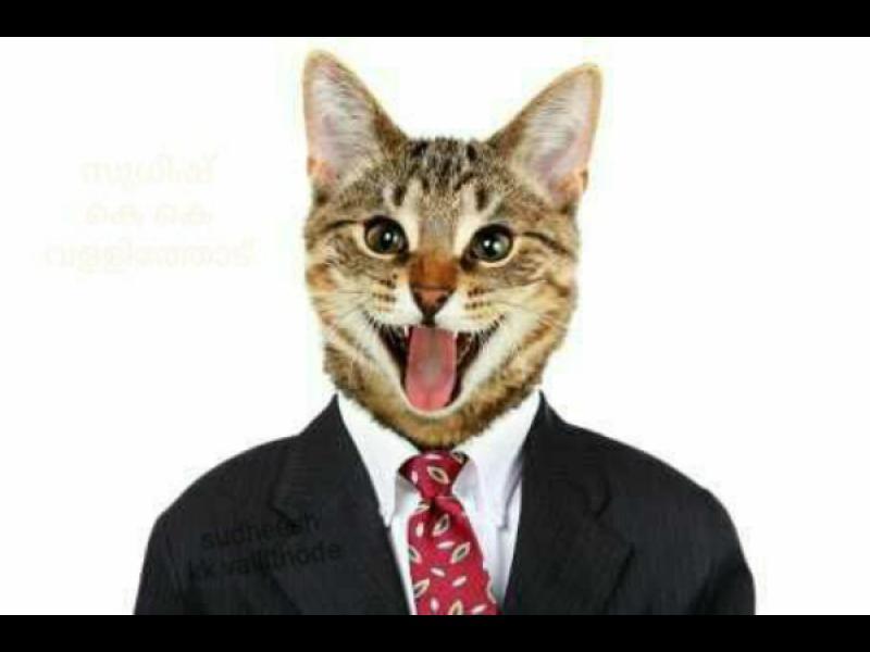 Да ти премахнат профила заради снимка на котка