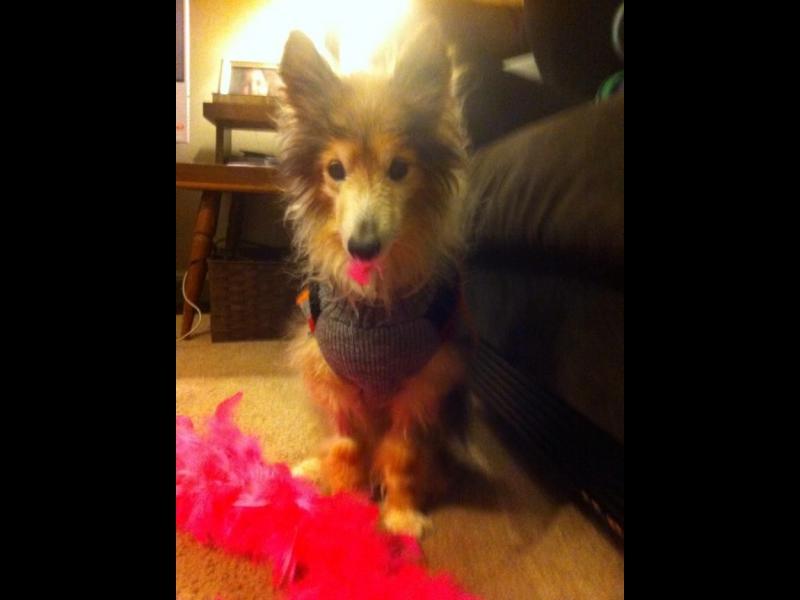 Семейство без дете осинови умиращо куче