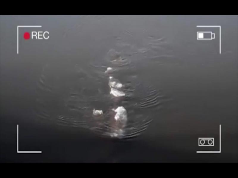 Водно чудовище се появи в Аляска /ВИДЕО/