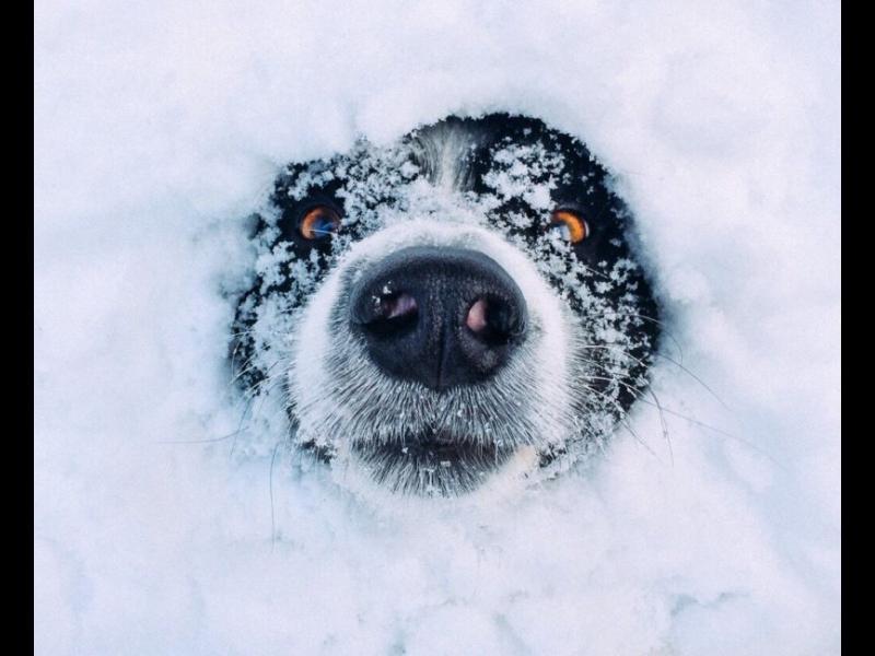 Тихо се сипе първият сняг, виснали жици над главите ни бдят