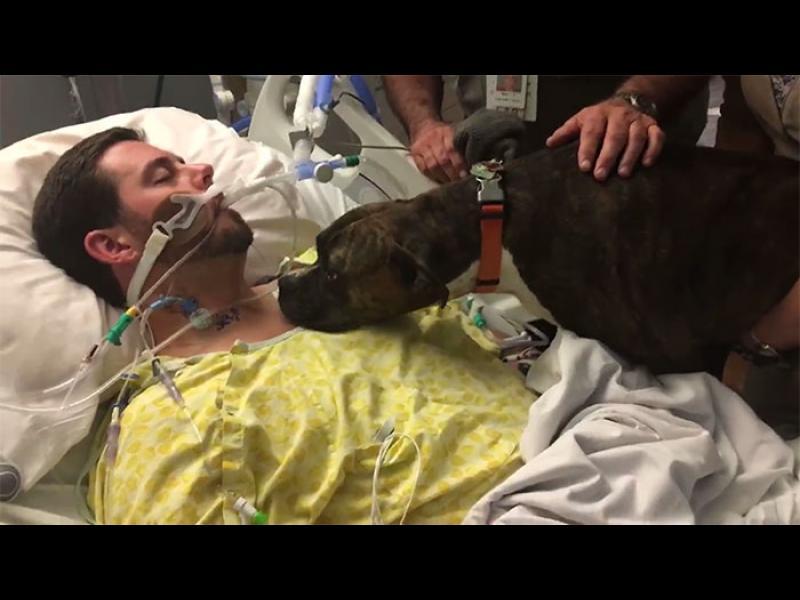 Куче отива при умиращия си стопанин, за да се сбогува с него /ВИДЕО+СНИМКИ/
