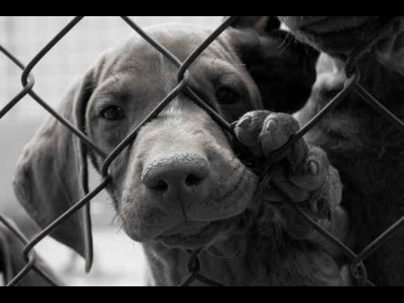 Моля ви, не си взимайте куче!