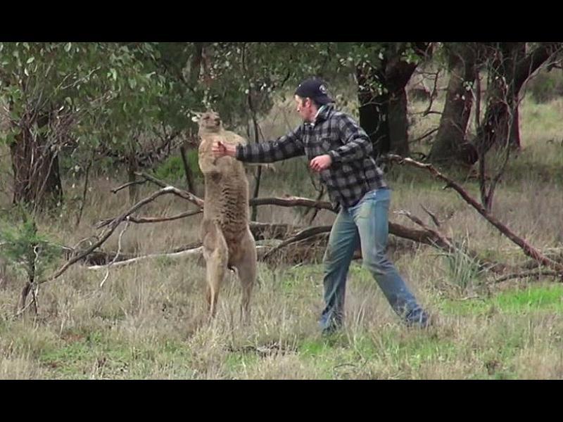 Мъж удари крoше на кенгуру, за да спаси кучето си /ВИДЕО/