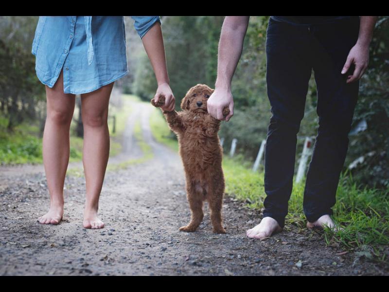 Кучетата подобряват връзките ни по три изненадващи начина