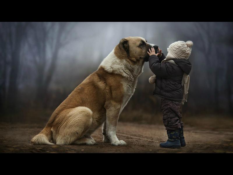 Кучето може да избави детето от страхове
