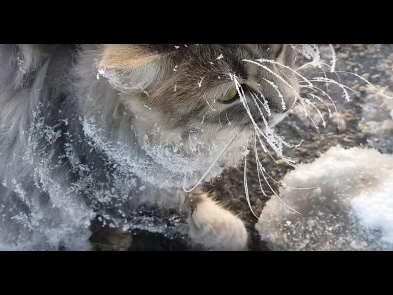 Спасиха котка, замръзнала в леда на минус 35 градуса! /ВИДЕО/