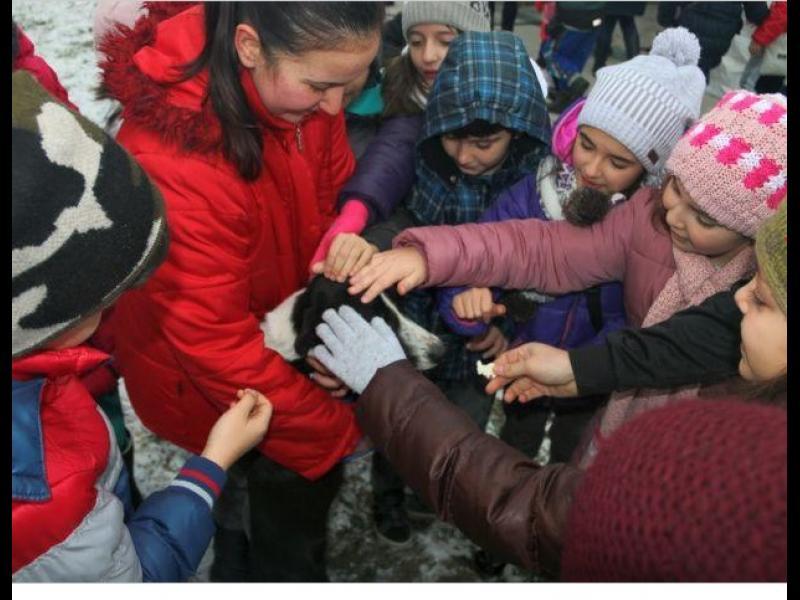 Деца помагат на безстопанствените кучета в приюта в Търговище /СНИМКИ/