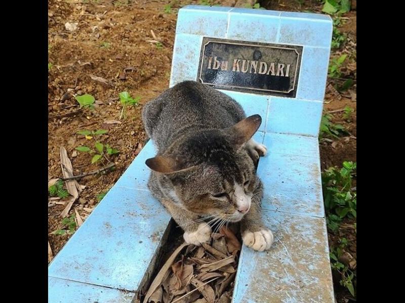 Котка тъгува цяла година върху гроба на стопанката си