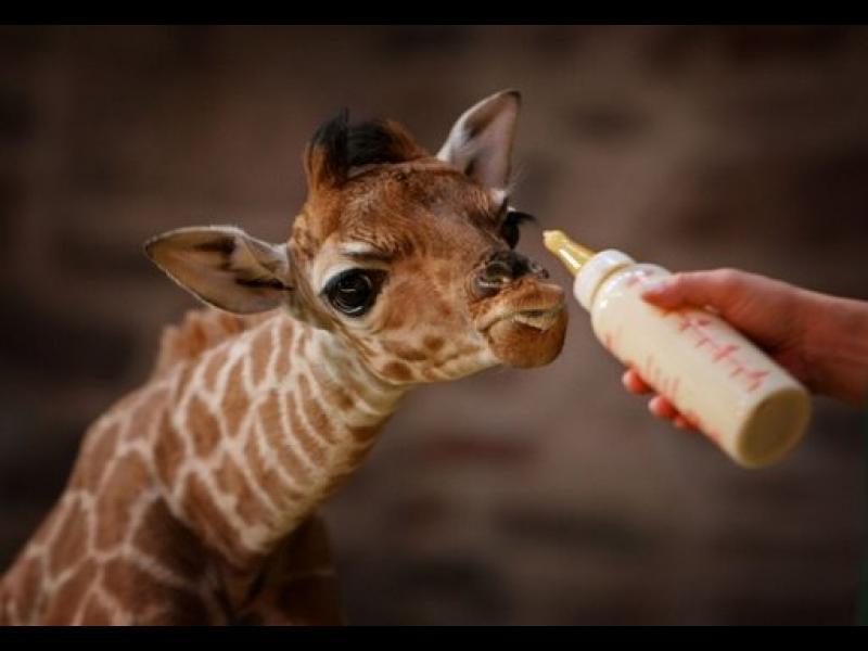 50 интересни факти за животните