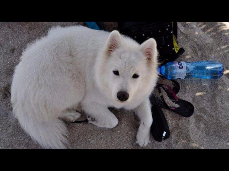 Задържаха изрода, застрелял куче пред очите на стопанката му на плажа във Варна