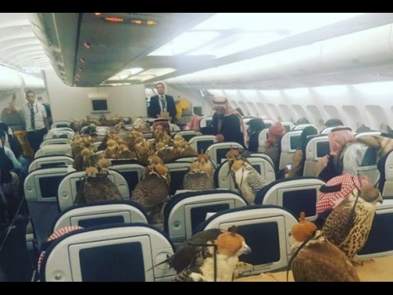 Саудитски принц превози 80 сокола в първа класа на самолет