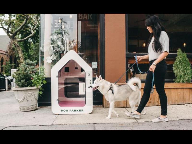 Достъпът за кучета ЗАБРАНЕН! /ВИДЕО/