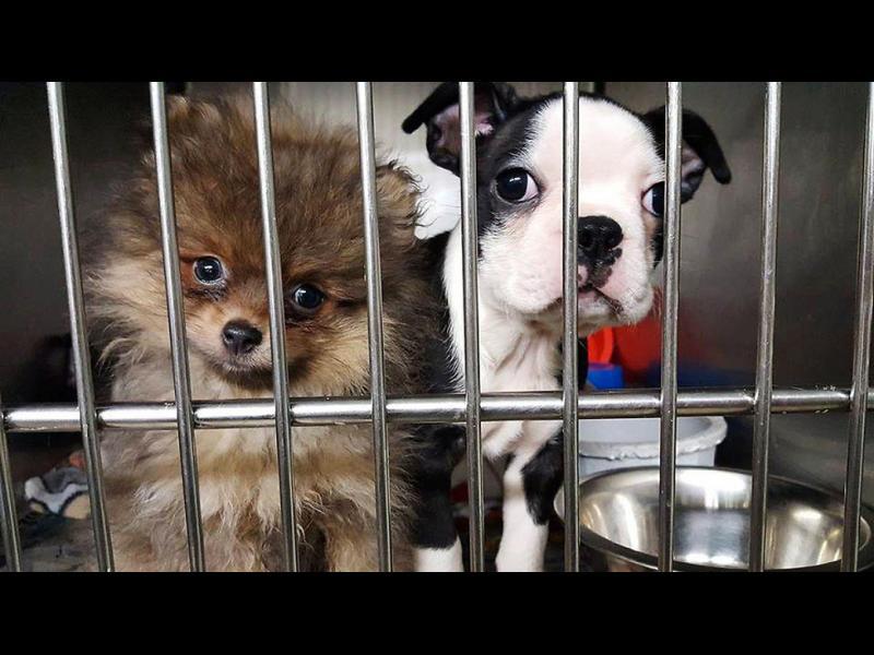 Като на кино: Полицаи спасиха 103 кученца в катастрофа