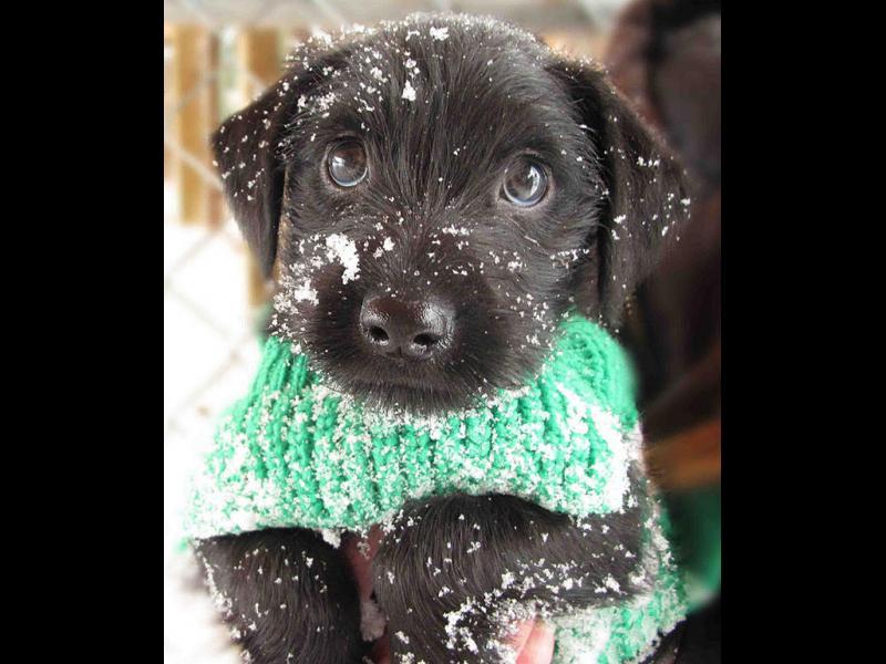 Сладки животни, които виждат сняг за първи път