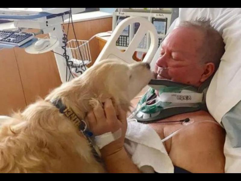 Куче спаси живота на стопанина си, като лежа 24 часа върху него и го предпази от измръзване