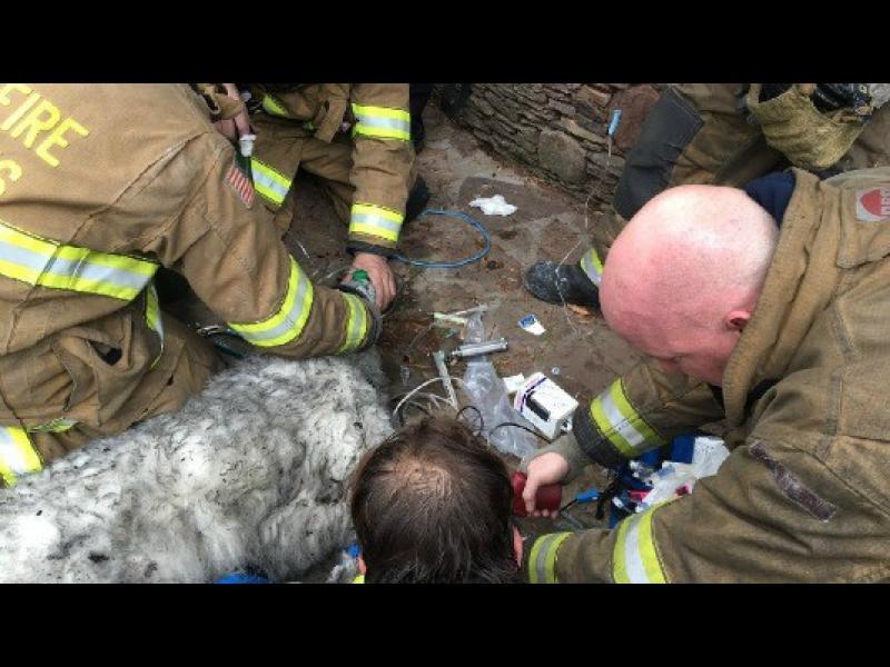 Огнеборци върнаха към живота пострадало при пожар куче /ВИДЕО/