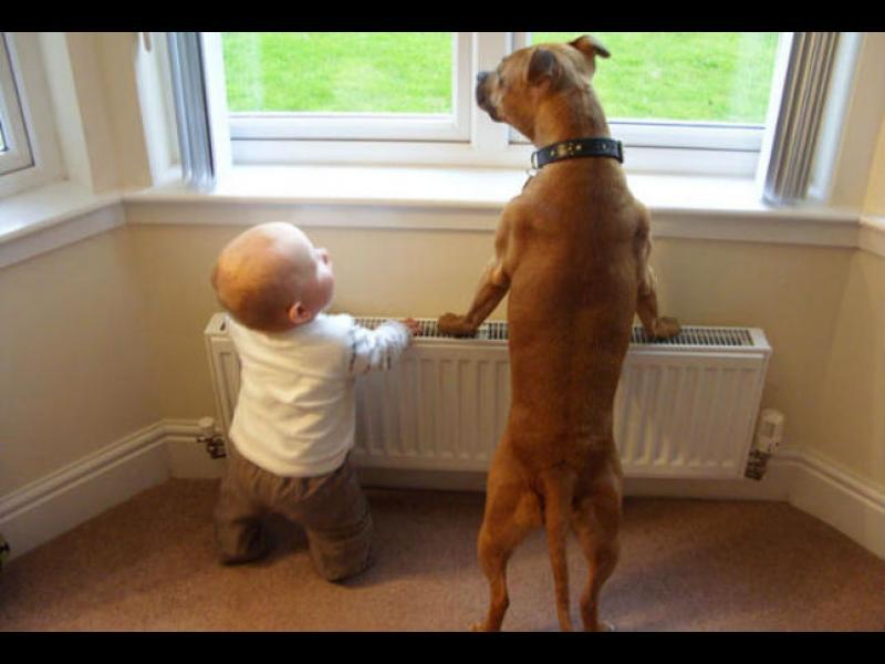 Малки деца в компанията на огромните си кучета /СНИМКИ/