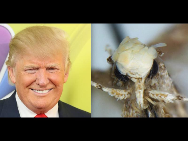 Кръстиха застрашен молец на Доналд Тръмп