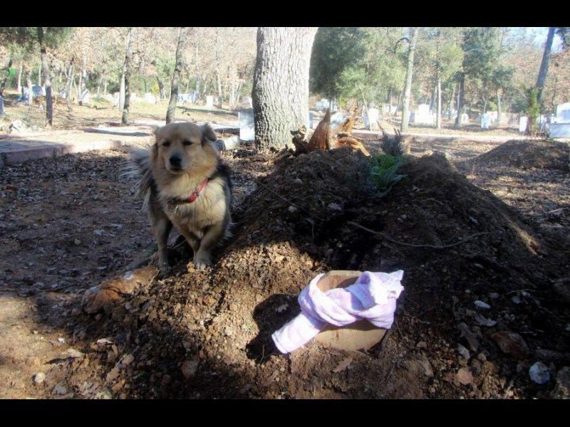 Преданост: Куче посещава гроба на стопанина си всеки ден /СНИМКИ/
