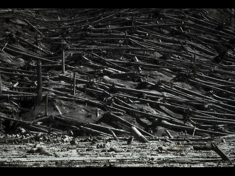Тунгуска: Най-голямата експлозия в човешката история остава загадка