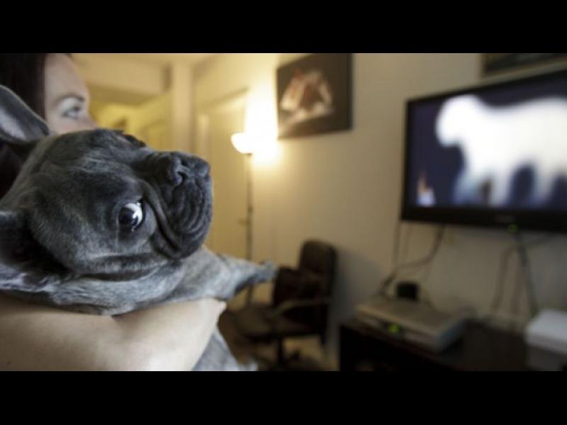 Какво виждат кучетата, когато гледат телевизия?