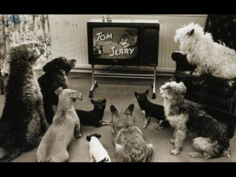 Какво вижда кучето, когато гледа телевизия?