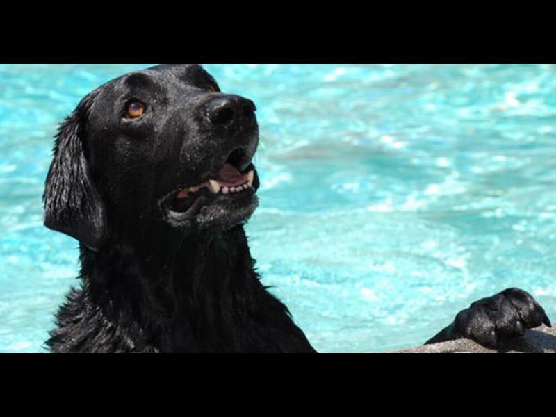 Смело куче спаси бебенце от удавяне /ВИДЕО/