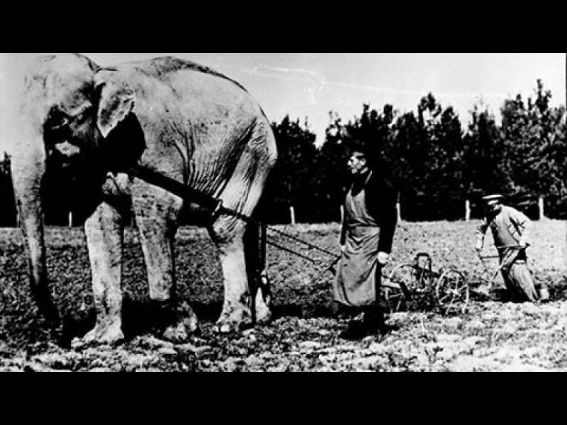 Тъжната история на слоновете Наал и Диаманди в София /СНИМКИ/
