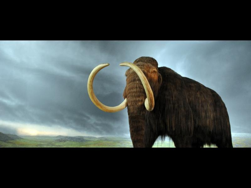 11 изчезнали животински вида, които чакат ред за връщане към живот