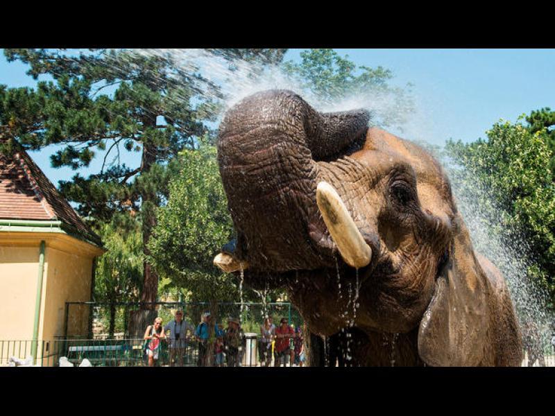 Кой е най-старият зоопарк в света?