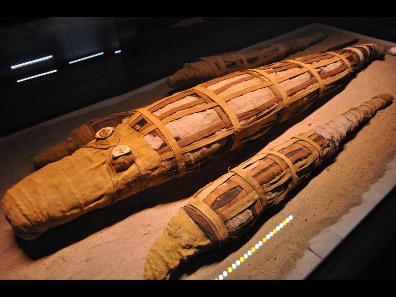 Археолози откриха мумия на 4-метров крокодил