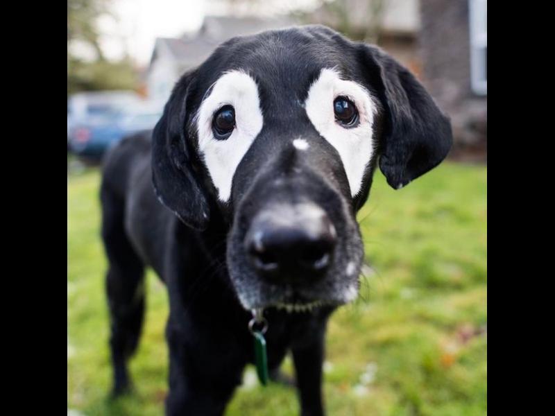 Как това куче промени живота на едно момченце? /ВИДЕО+СНИМКИ/