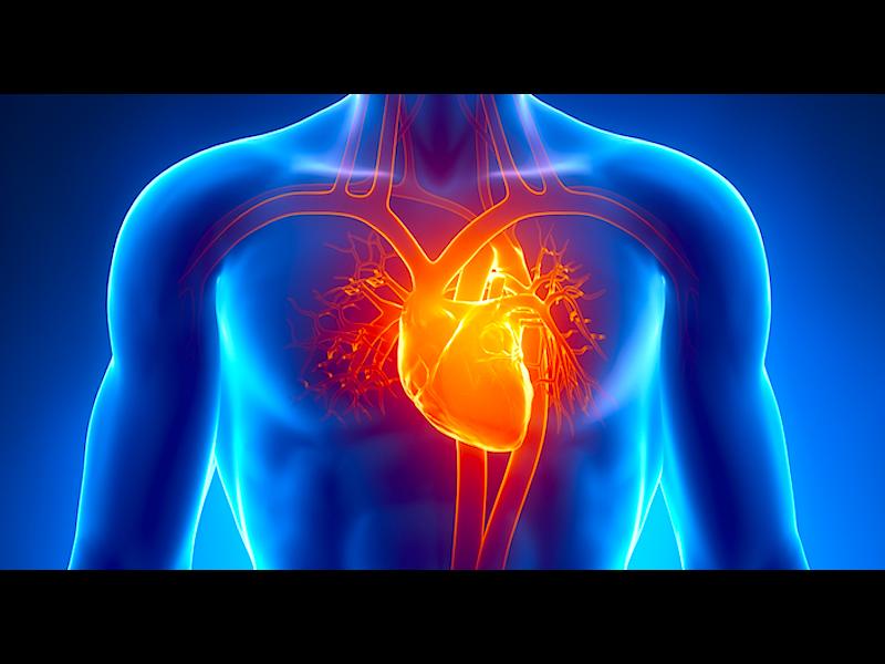 Любопитни факти за сърцето, които може би не знаете /ВИДЕО/