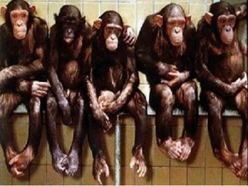 За маймуните и личния избор